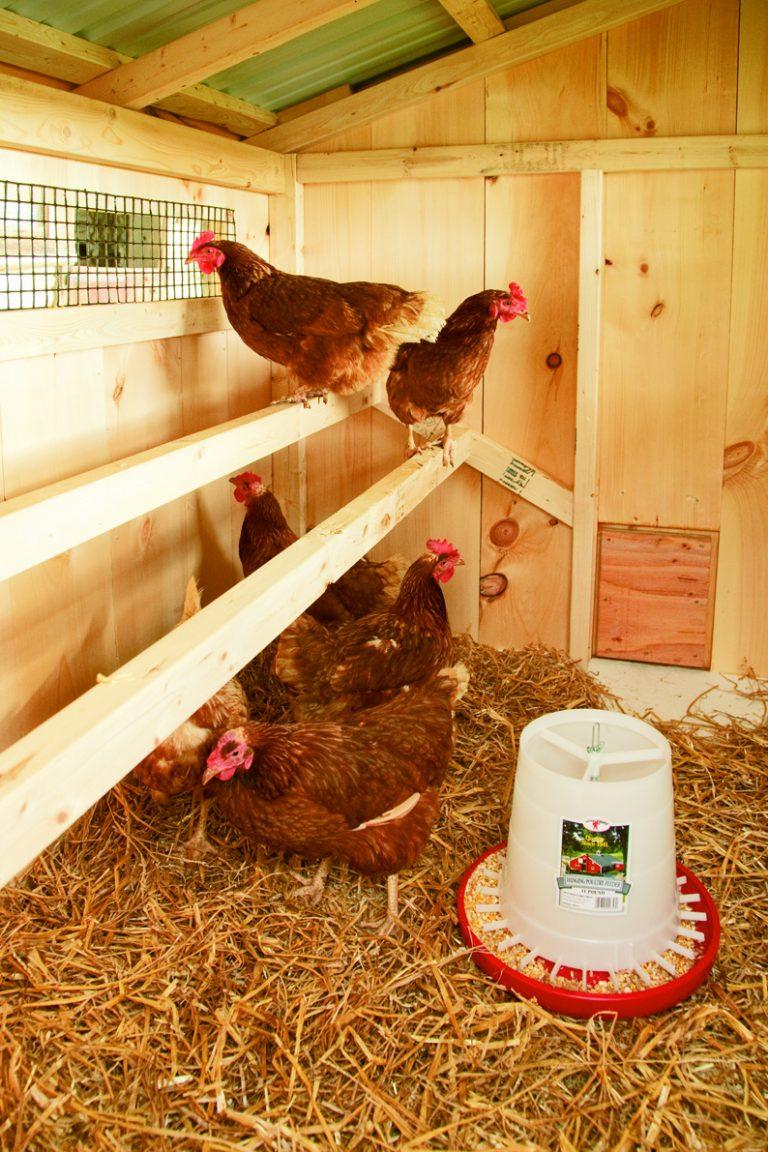 chicken coop size Chickens Inside Coop