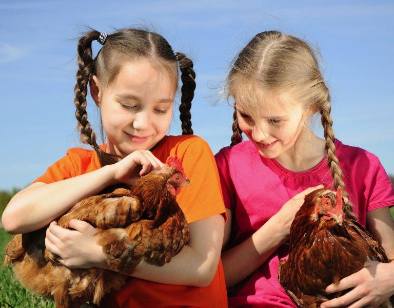 chicken coop size Children With Chickens