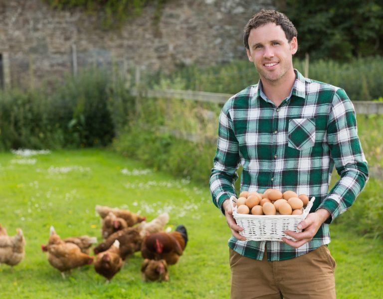 chicken coop size hobby farmer