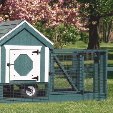 3x3 backyard chicken coops