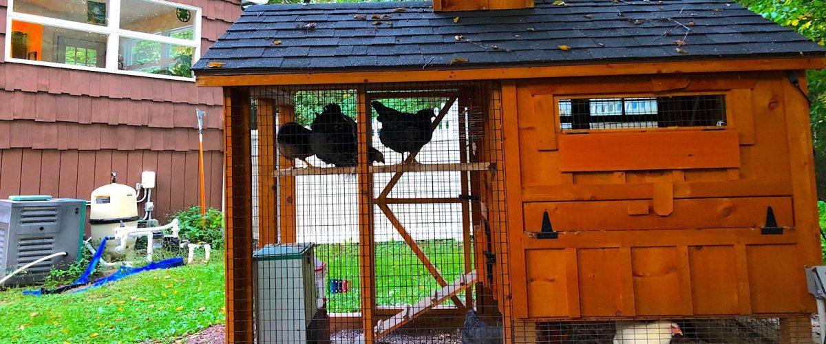chicken coop in connecticut