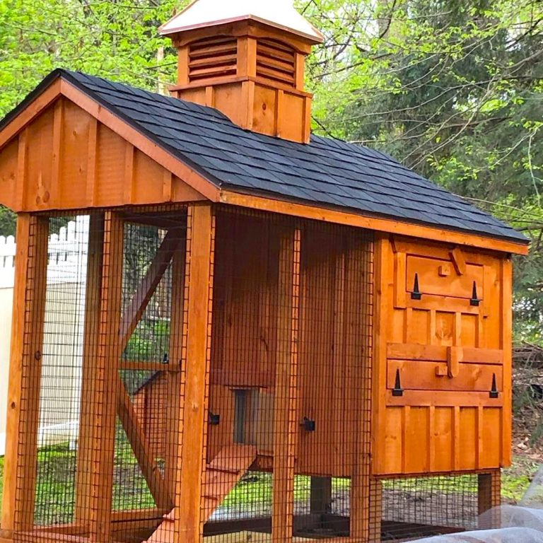 chicken coop syory in connecticut