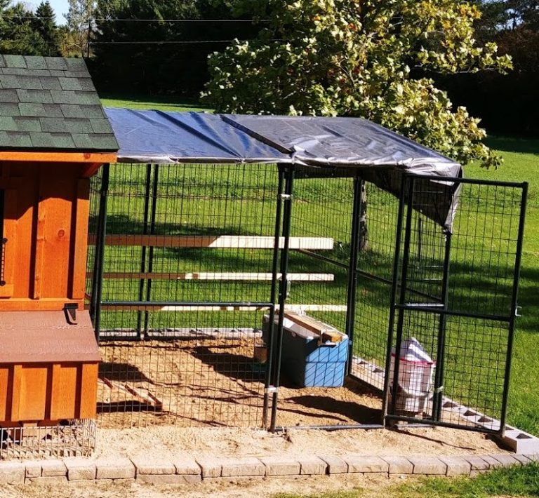 chicken coop and run in Michigan