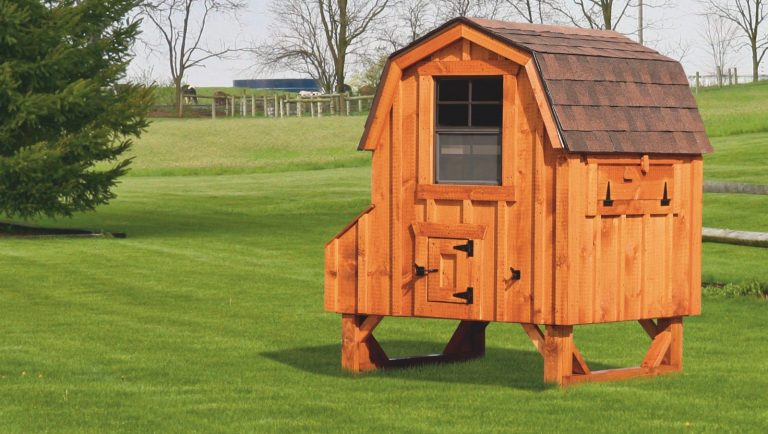 """barn style chicken coops 4x4 Dutch With board and batten siding 78"""" high 14"""" off ground 4 nesting boxes Cedar stain Walnut brown shingles 1600x1600 1"""