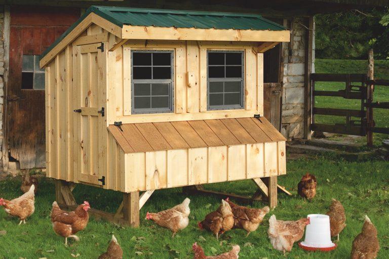 amish chicken coop builder