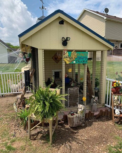 amys chicken coop with run