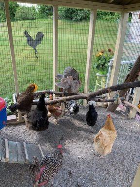 chicken coop with run 8