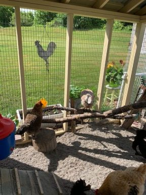 chicken coop with run 9