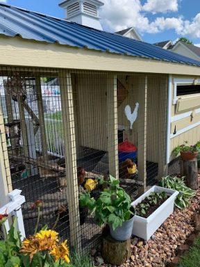 chicken coop with run 14