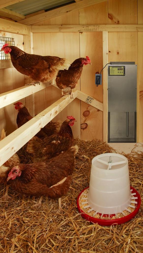 chicken-coop-auto-door