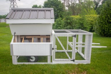 chicken coop for chickens