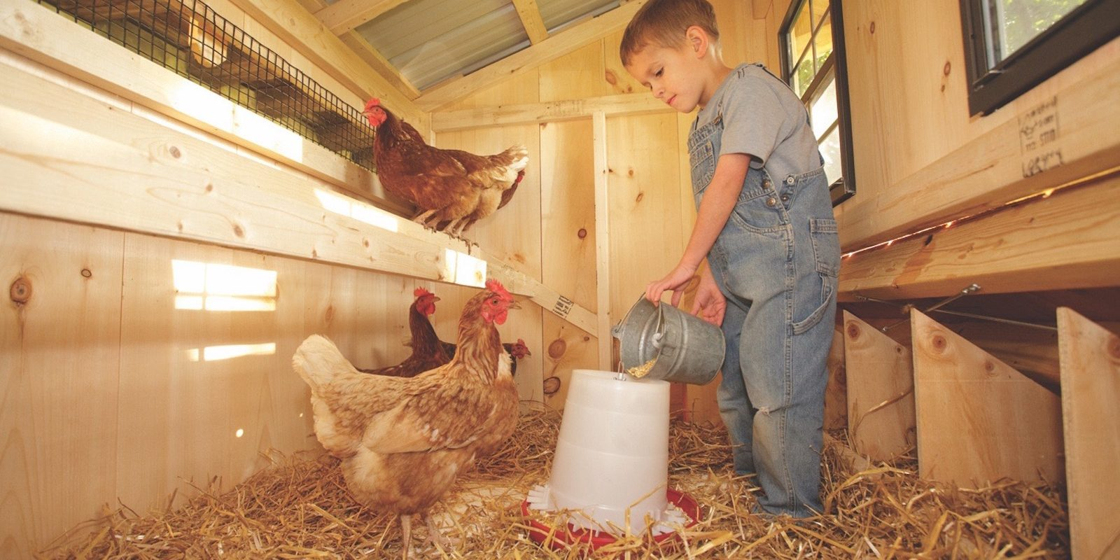 inside a chicken coop Boy With Chickens 2