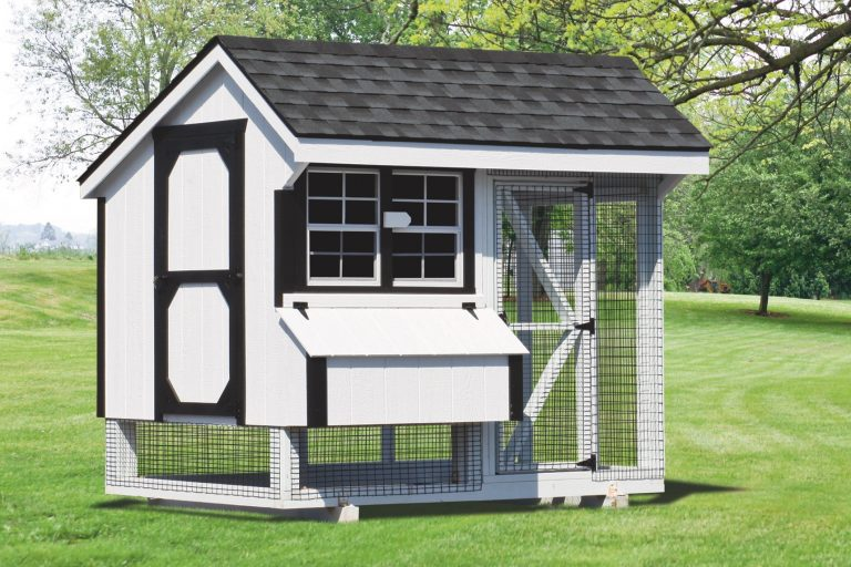 chicken coop and run 6x8 Combination 1